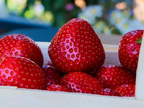 Wat is het verschil tussen jam, confiture, en marmelade?
